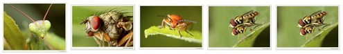 Canon 50D plus EF-S 60mm f/2.8 -- Insect macro photography by Andy Sobanski