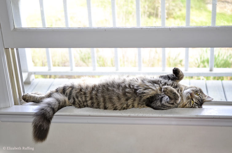 Tabby cat stretched out on her back with tummy in the air, by Elizabeth Ruffing