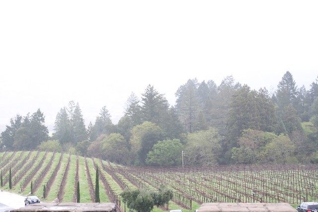 woods and vineyards