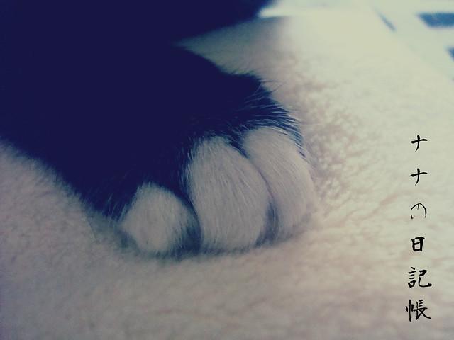 猫の足 2