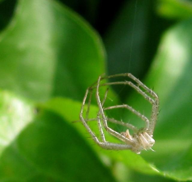 Spider skin