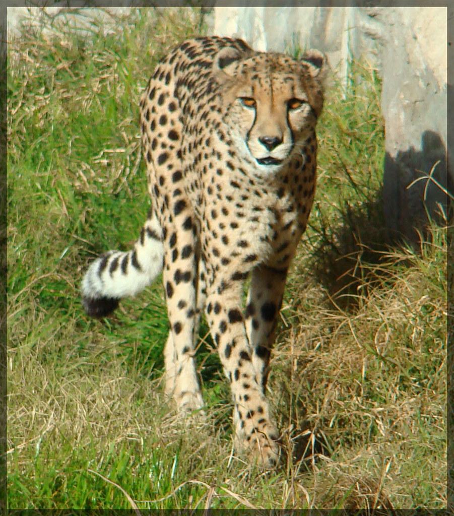 Animales en Temaikén