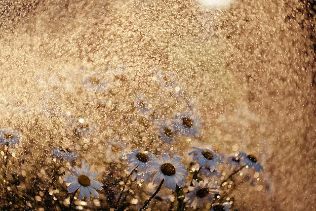 Golden rain - Beautiful Bokeh Photography