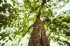 Tree #179/366
