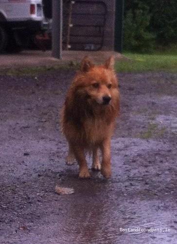 Sat, Jul 7th, 2012 Found Male Dog - The Local Area, Ardcath, Meath