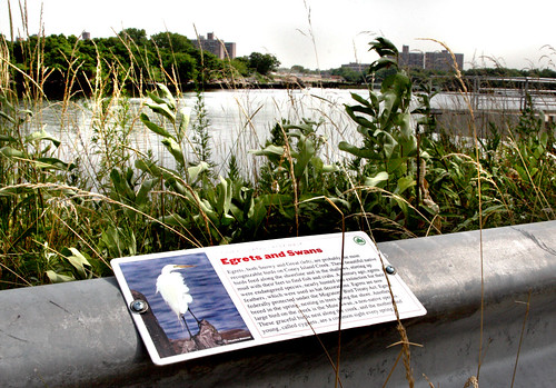 Coney Island Creek Self-Guided Tour