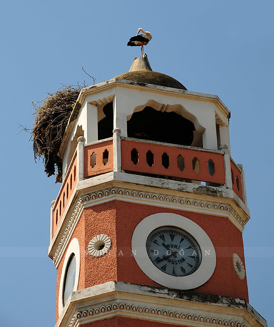 Yenişehir Saat Kulesi'nde Leylek Yuva Yapmış
