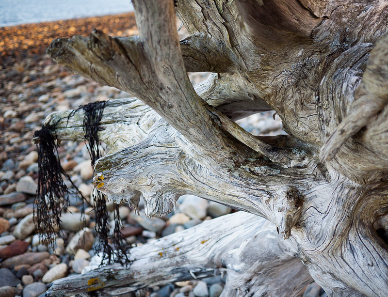 Penobscot Bay Driftwood Lincolnville Maine 5