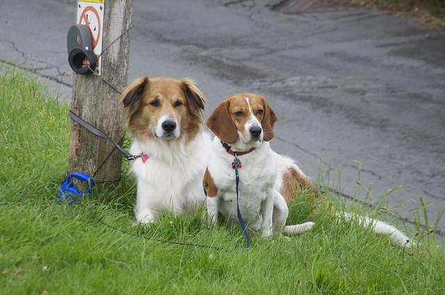 Macy & Bella