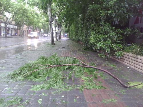 上海 台風