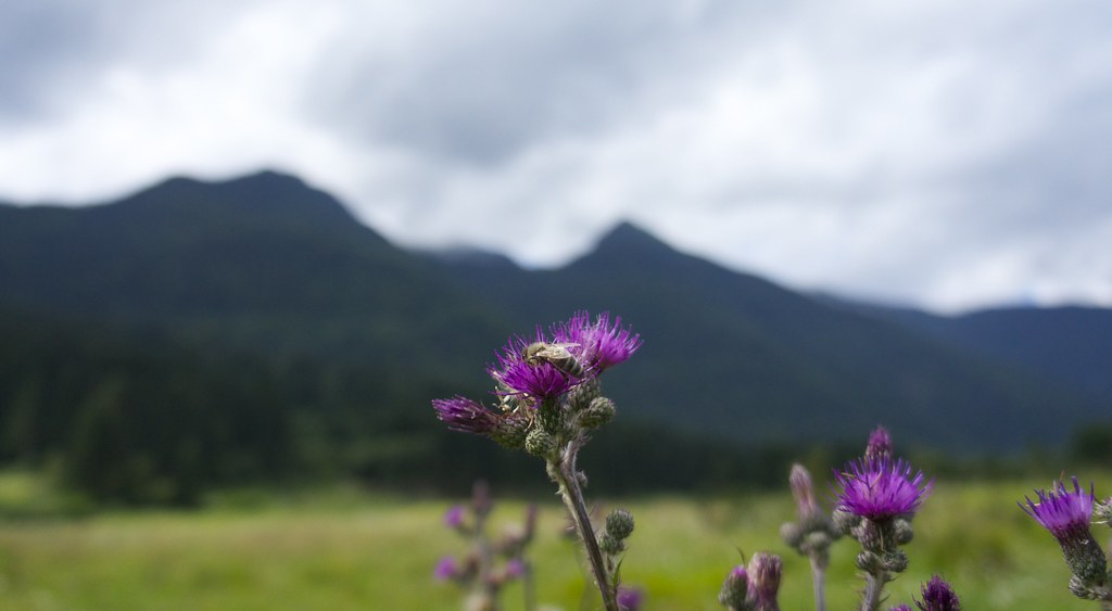 Flowers, bee and mountains