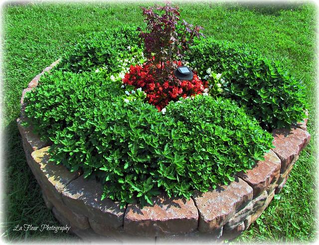 Round Flower Bed : Round flower bed.8.17.12  Flickr - Photo Sharing!