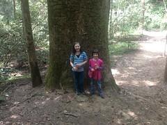 The Girls at the Gannett Poplar
