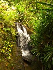 Colo-I-Suva Rainforest Park