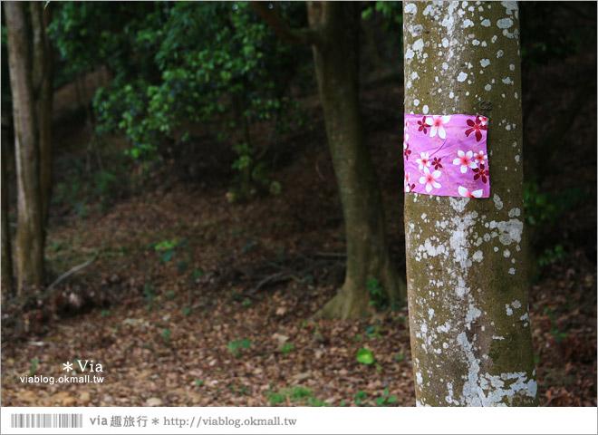 【彰化賞桐景點】彰化德興社區桐花~爆炸夢幻油桐花毯....必去!期待中5