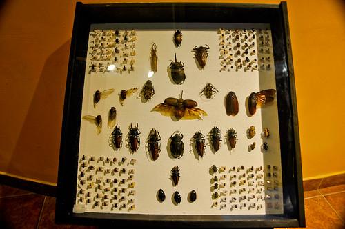 Museo de Paleontología (20)