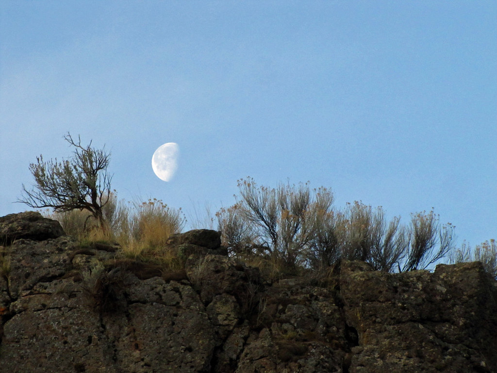The Moon Jumped Over the Sagebrush