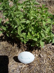 Greek Oregano Spoon Garden Marker