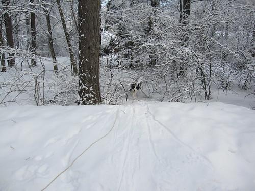 ランディ~雪の中を探検 4.1 by Poran111