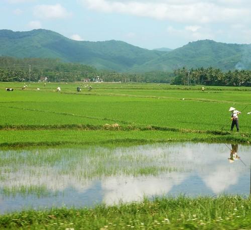 V-Route Quy Nhon-Da Nang (28)