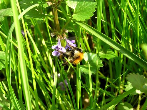 Fuzzy little bumblebee