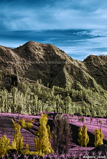 Colour of Cemara Lawang (IR)