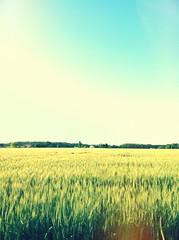 [フリー画像素材] 自然風景, 田園・農場 ID:201205122000