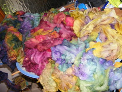 Poll Dorset fleece dyed