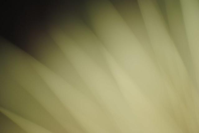 _DSC0379