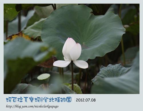 台北植物園6