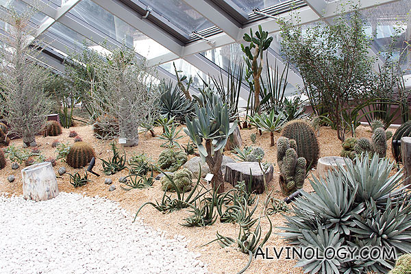 More arid plants, cactuses