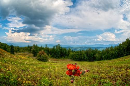 sky flower landscape wildflower indianpaintbrush 365project afdxfisheyenikkor105mmf28ged 3652012