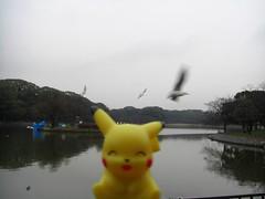 Pikachu in Akashi, Hyogo 28 (Akashi Park)