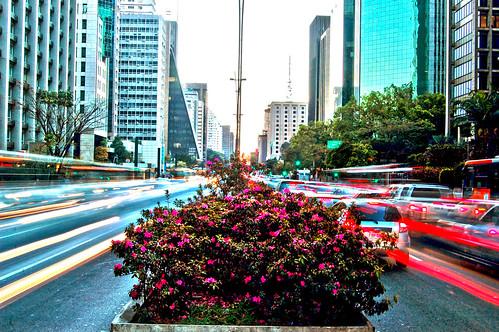 Canteiro da Paulista