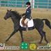 Horse English