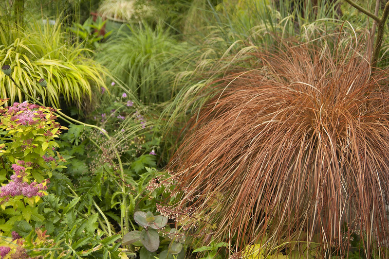 red carex
