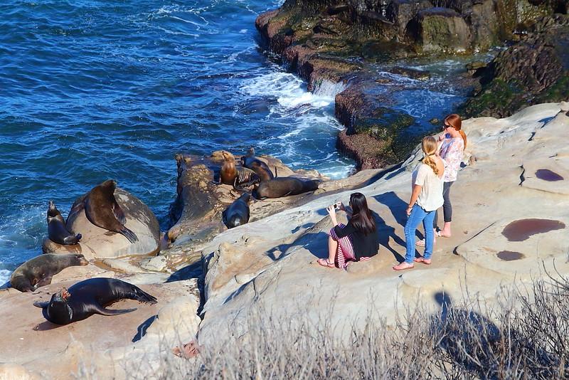 IMG_2139 California Sea Lion and Tourists