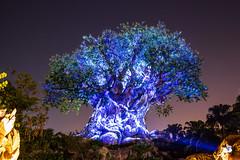 Night time Tree of Life