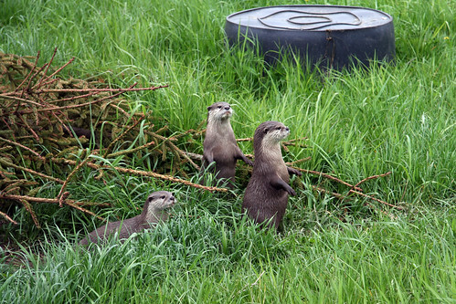 otters by world of jan