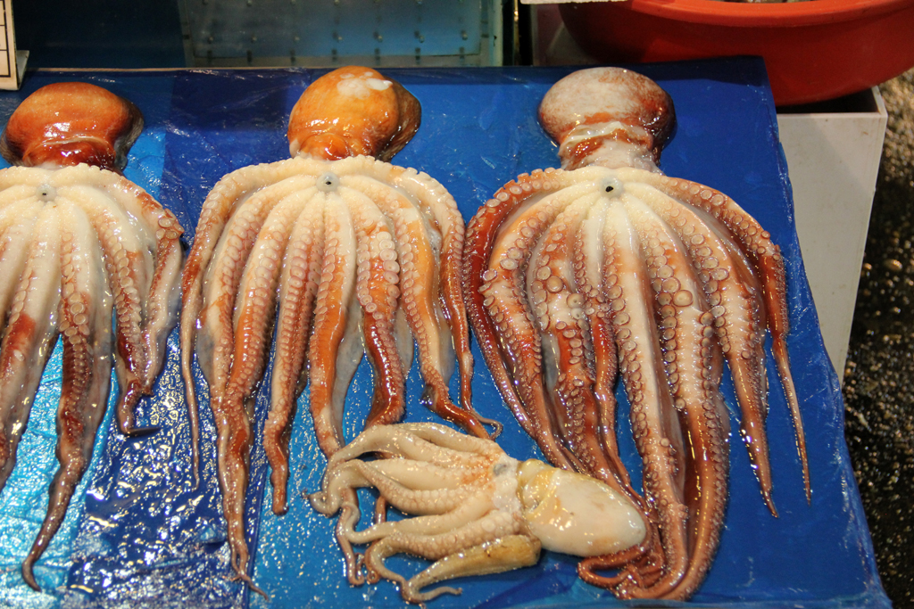 Prized collection of octopus