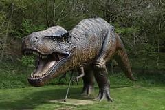 tyrannosaurus, fauna, dinosaur,
