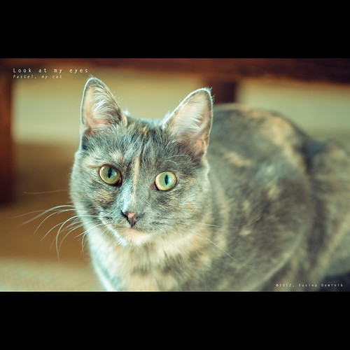 Look at my eyes | Pastel, my cat (Hi-Res JPEG file @ 1000iso)