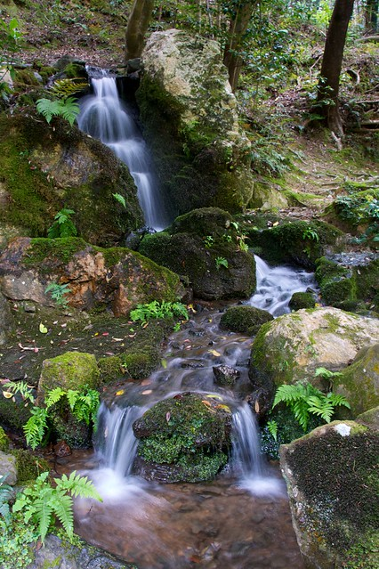 7 Elements That Make Japanese Gardens A Photographer S
