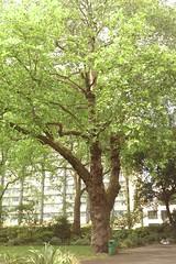 maidenhair tree(0.0), flower(0.0), grove(0.0), food(0.0), deciduous(1.0), shrub(1.0), branch(1.0), oak(1.0), tree(1.0), plant(1.0), produce(1.0),
