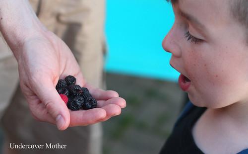 g berries