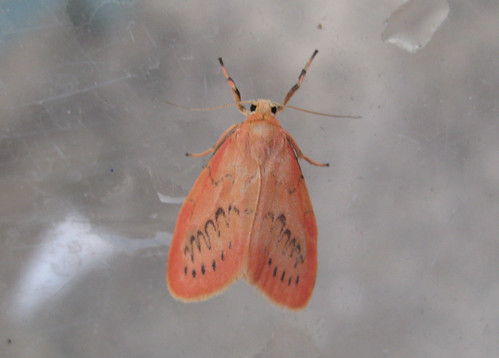 Rosy Footman