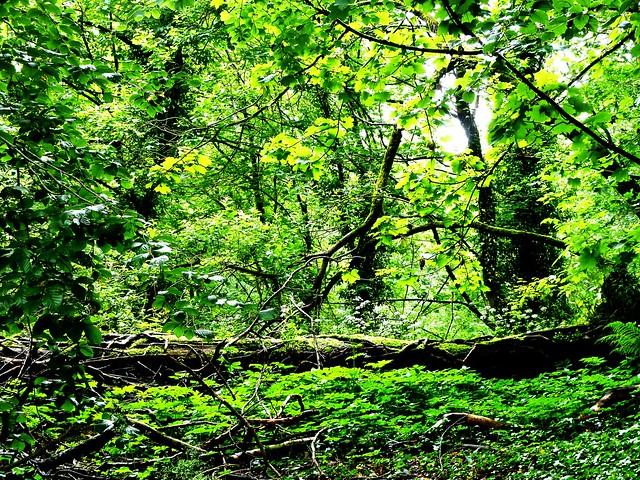 Woodland Scene, Neilston