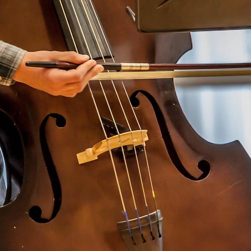 Bass; copyright 2012: Georg Berg