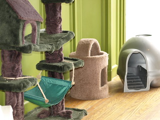 Newberg Cat Room