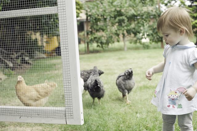 hannah-chickens